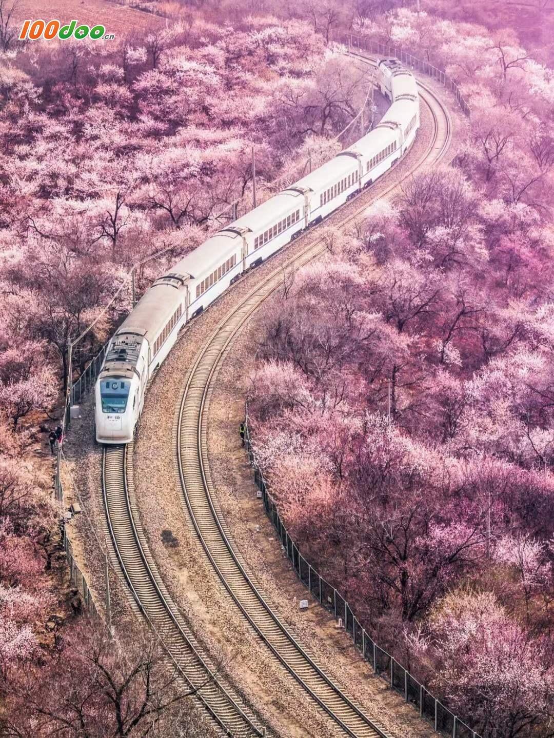 赏开往春天的列车的美景 ,感受不久即将来临的春天